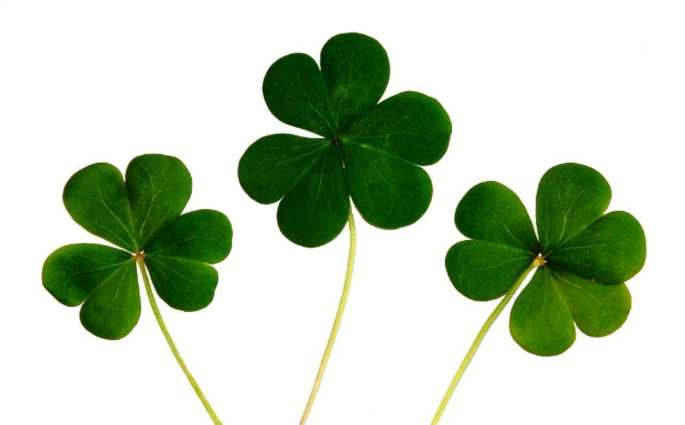 A-United-Irish-Team